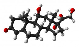 The Cortisol Molecule