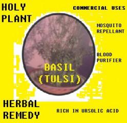 Basil (Tulsi) Leaves: Health Benefits & Uses