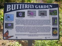 a butterfly  garden