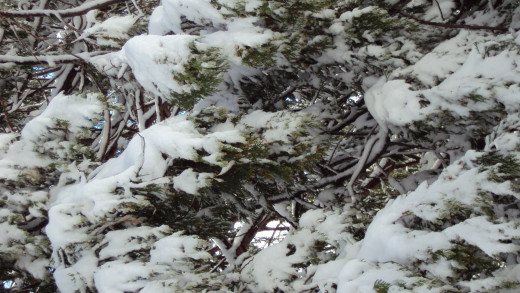 More snow on the branches of trees all around.