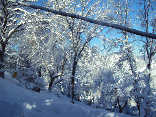 A power line in the foreground, and snowy trees in the background.