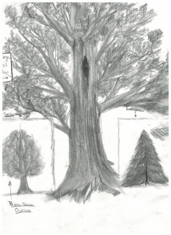 Drawing A Tree-Techniques to Add Texture to Your Drawing