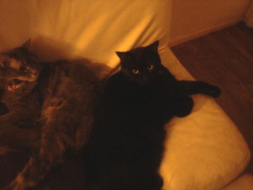 and snuggle