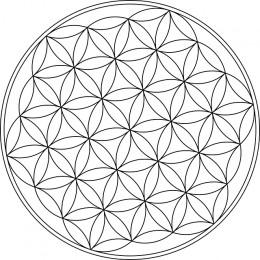 https://usercontent1.hubstatic.com/7503796_f260.jpg