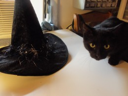 Did you see who dropped this hat on me?
