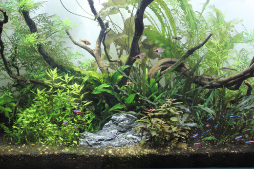 One of my aquascapes...CO2 has become an integral part of my aquascaping projects