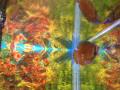 Easy Aquarium Fish: Dwarf Gourami Tank