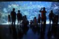 The Aquarium At KLCC,Kuala Lumpur