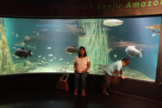 The Amazon River Exhibit. I requested my wife and son to pose in front,gives one a perspective of the size of these giant freshwater fishes.