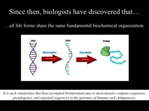 This is the central dogma in biology.
