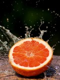 The Grapefruit Juice Effect. Drug Interactions and the Dangers of Grapefruit with Lipitor, Allegra, Proscor, Zoloft...