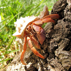 How to Care For a Land Hermit Crab