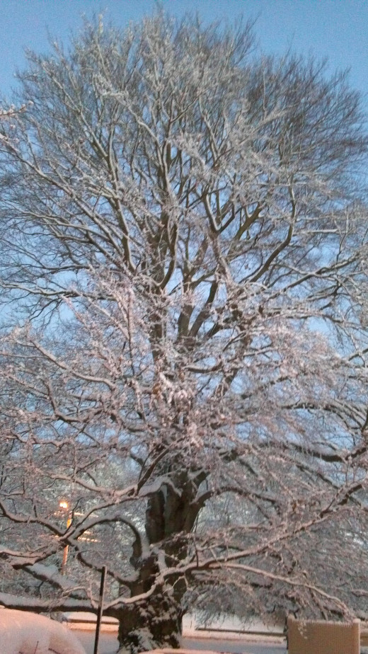 Bedecked in her winter finery following a snowfall