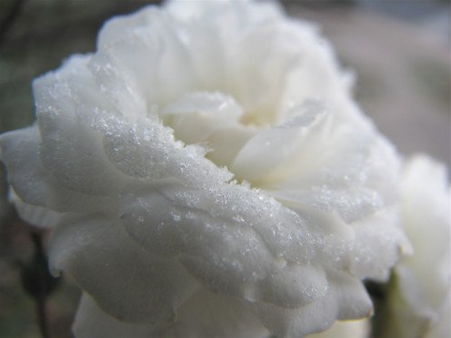 get inspiration from the morning frost on white petals the color of purity.
