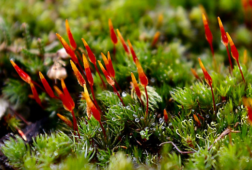 Mosses are not vascular plants and so lack roots, xylem and phloem. This means, however, that they can survive in areas with very little soil, or even on bare rock.