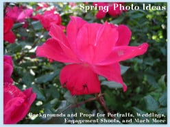 Spring Photo Ideas