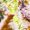 JashuaWorldPeace profile image