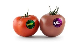 Genetically Modified Organisms: The truth about GMOs in our food, how they came to be, and health risks they may pose