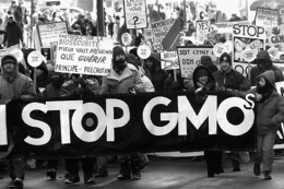 The stricter regulation of GMOs in the European Union is largely a result of public outcry against the adoption of GMO crops intended for consumption