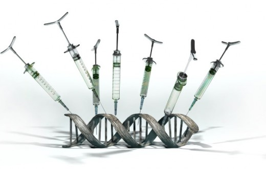 genetic modification the process of manually manipulating genetic makeup of an organism to pronounce or eradicate specific traits