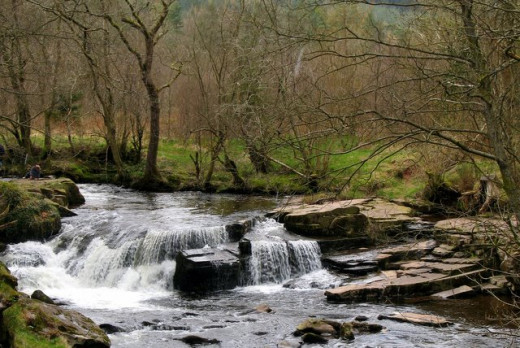 Small waterfalls or changes in the elevation in the river or stream create a well oxygenated environment for fish.
