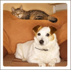 Dealing With a Jealous Pet Dog or Cat