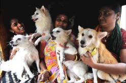 Travelling with pets in Indian Railways