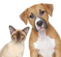 10 Uses of White Vinegar with House Pets