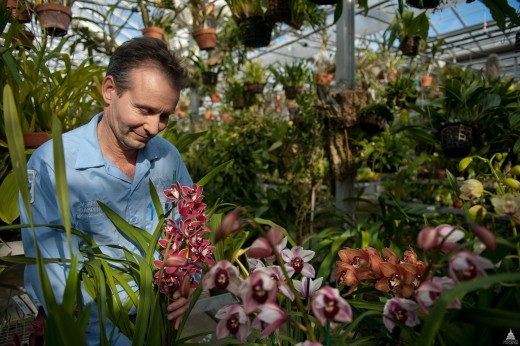 Caring for Orchids at the U.S. Botanical Garden