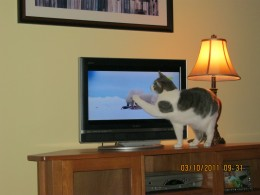 Our kitty, Misty, smacking the polar bears on the Animal Planet channel. I think she might occasionally miss having a television set. She hasn't complained too much, though.