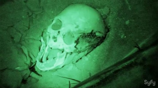 Skull found on destination Truth in the La Noria Cemetery.