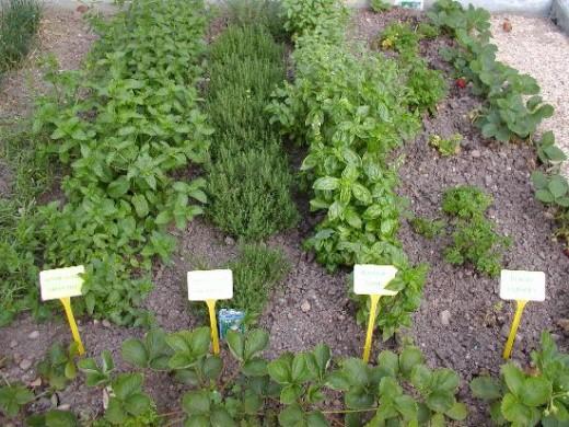 How to grow a herb garden for How to grow an herb garden