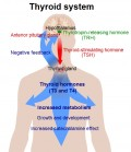Recognizing Symptoms of Hypothyroidism