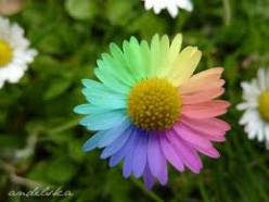 Colours Of A Rainbow : ROY G.BIV.