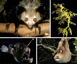 Amazing Animals: Things you may not know exist.