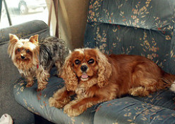 How to Have a Pet while Living in an RV