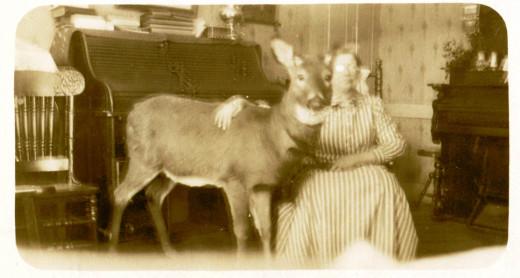 Vintage photo of unidentified pet deer owner