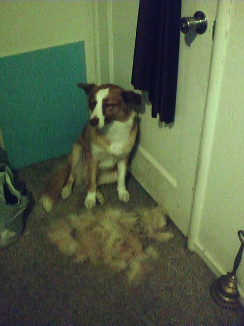 This is why I need the Bissell Pet Hair Eraser vacuum