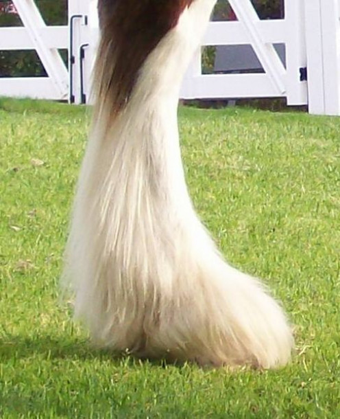 The Clydesdale foot takes a big shoe, but still looks good. Even larger shoe sizes need not be clunky.