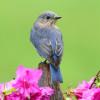 TheSavvySongbird profile image