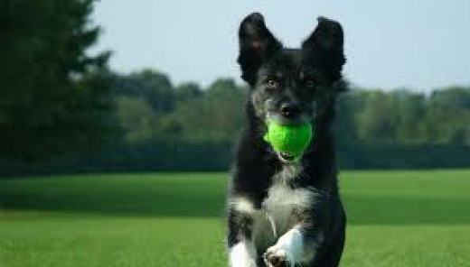 Dogs love to play fetch and it also will help keep your dog in good shape. Of course you as the owner can walk with your pet and get exercise yourself.