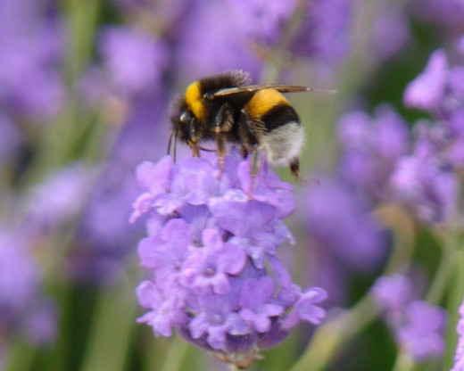 Are you a busy bee or do you have a large chunk of free time?