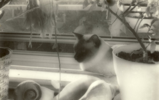 My roommates cat loved my sunny window!