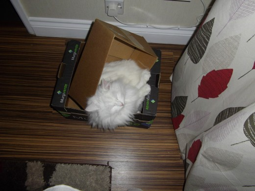 Cat sleeping in a box inside another box.