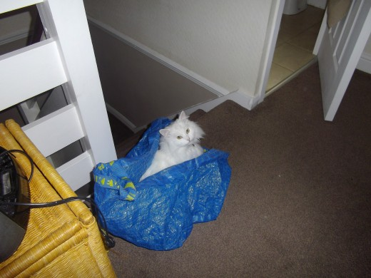 White Cat hiding inside a laundry bag.