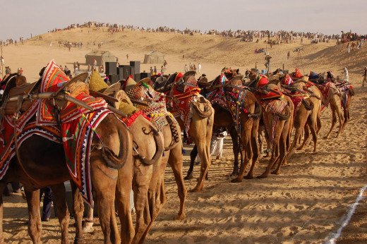 Bikaner Camel Festival - Events and Fete in Rajasthan