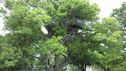 A real treehouse, with plumbing, that is available for rent