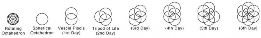 7 circles are used to create the seed of life.