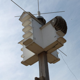 Honey Bee Swarm takes over a Purple Martin House.