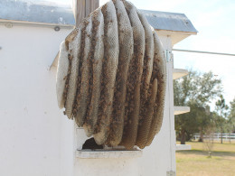 Colony built comb outside and inside one compartment.